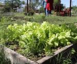 Es mercado rodante, alternativa de salud. Frutas y vegetales del campo a la mesa
