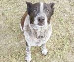Un perro anciano ayuda a salvar a una niña perdida en el bosque