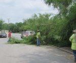 Retiran árbol caído al atender llamado