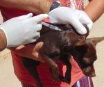Exhortan a vacunar perros  y gatos contra la hidrofobia