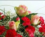 Restringen ingreso de flores por plagas. Festejos del Día de la Madre
