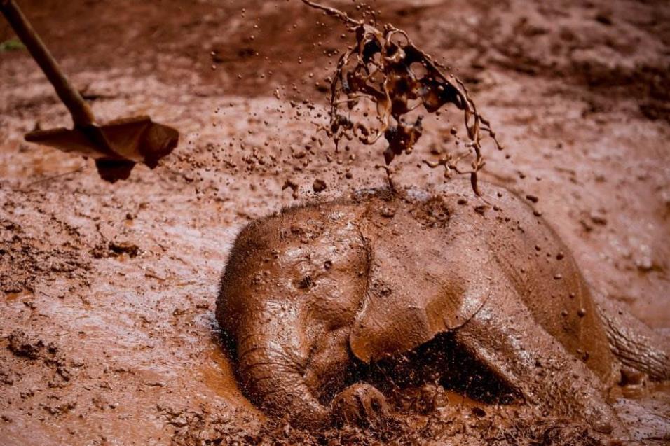 Una cría de elefante se da un baño de barro en el refugio de elefantes David Scheldrick en Nairobi (Kenia), el 10 de abril de 2018. El centro recoge desde 1977 a crías y elefantes adultos que se encuentran en peligro. DAI KUROKAWA EFE