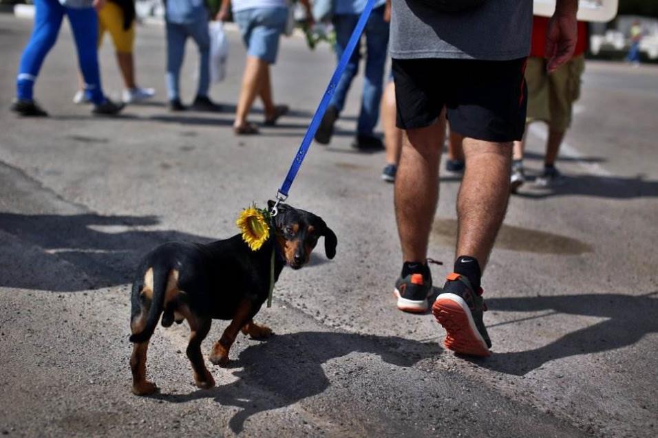 Un hombre participa con su mascota en una marcha reclamando una ley de protección para los animales en La Habana (Cuba), el 15 de abril de 2018. ALEJANDRO ERNESTO EFE