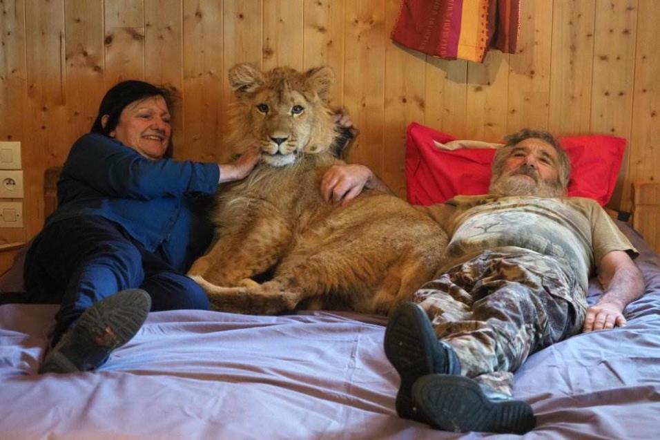 Simba, un león de nueve meses, posa en la habitación de Dominique y Juliette Cases, propietarios de un pequeño zoológico privado en Casteil (Francia), el 27 de abril de 2018. RAYMOND ROIG AFP