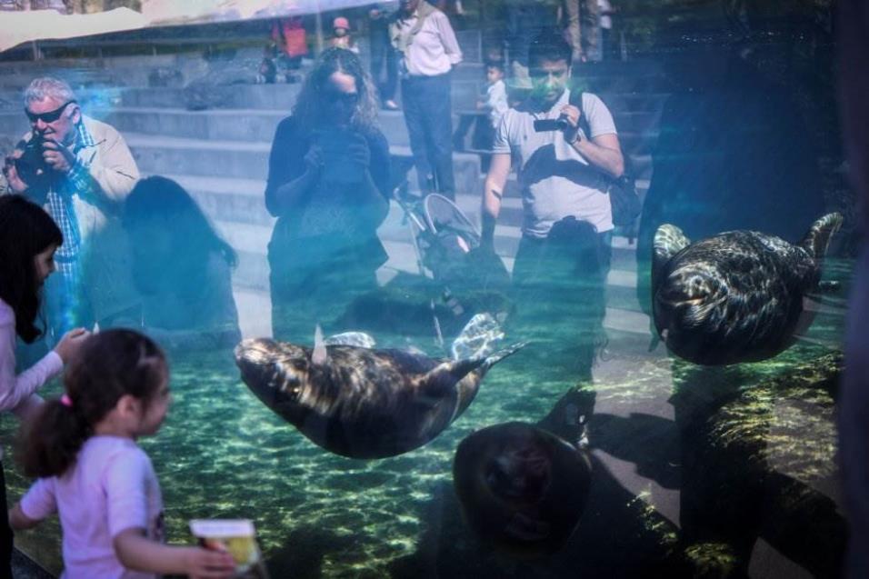 Un grupo de personas mira a dos leones marinos en el Zoo de Vincennes de París (Francia), el 18 de abril de 2018. STEPHANE DE SAKUTIN AFP