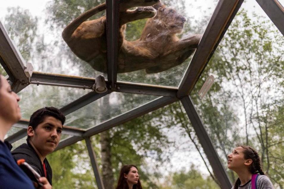 Los visitantes miran a un león desde el túnel de observación en el zoológico Thoiry, al oeste de París (Francia), el 23 de abril de 2018. LIONEL BONAVENTURE AFP