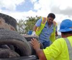 Se recolectan neumáticos para evitar enfermedades