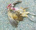 Aplastan la fauna en la ribereña