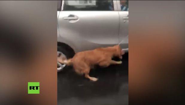 Amarran un perro a un auto y lo arrastran bajo la lluvia