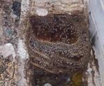 Destapa un registro y lo atacan abejas