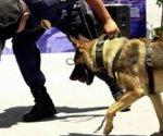 Caninos encuentran mariguana en máquinas de soldar en Veracruz