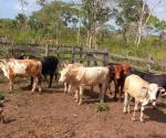 Preocupa calor a ganaderos