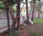 Cae pino sobre barda de kínder; causa sólo daños materiales