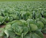 Impulsan Farm Fresh en distritos escolares