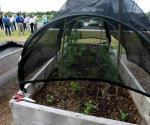 Tienen una  buena IDEA. Impulsan instalación de jardines orgánicos