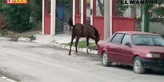 Peligro latente por los caballos sueltos