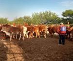 Embosca al ganado una plaga de mosca