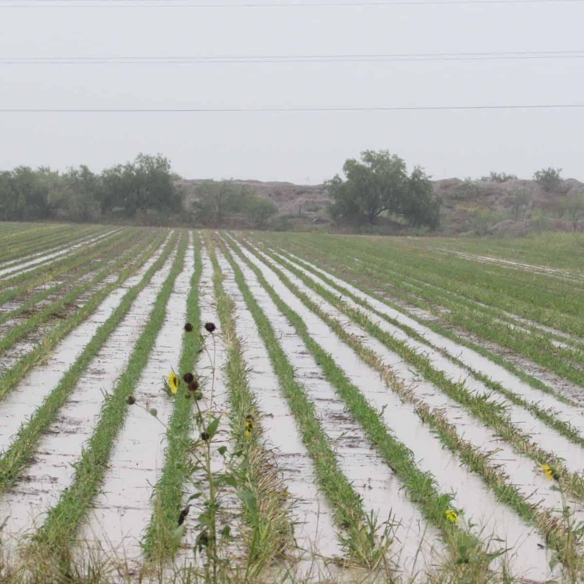 CAMPO. Las intensas lluvias afectaron algunas colonias pero beneficiarán a los ganaderos.