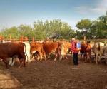 Acechan garrapas los hatos de ganado