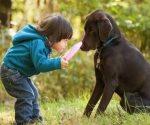 Muerde un  perro a menor de 2 años en Nuevo Laredo