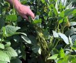 Aumenta costo de aranceles en agro de Estados Unidos