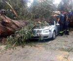 Cae árbol sobre auto y aplasta a familia