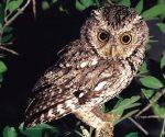 Rescatan especies protegidas en CDMX