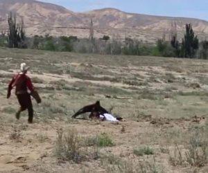 Un águila real se lanza sobre una niña de 8 años y la retiene en el suelo