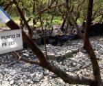 Denuncian ecocidio en Laguna de San Andrés. Ocasionan mortandad de especies marinas