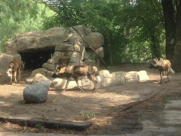 Adecuan áreas del zoológico para protección de especies