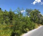 Hierbas, maleza y árboles invaden las vías y accesos