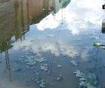 Una pesadilla viven las familias con brotes de aguas negras.