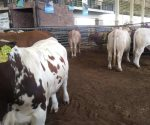 Con júbilo reciben campesinos y ganaderos la precipitación pluvial