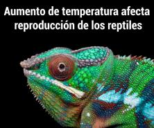 Afecta aumento de temperatura reproducción de reptiles