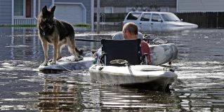 Animales rescatados tras paso de Florence en EUA
