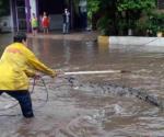 Capturan cocodrilo en calles Michoacán