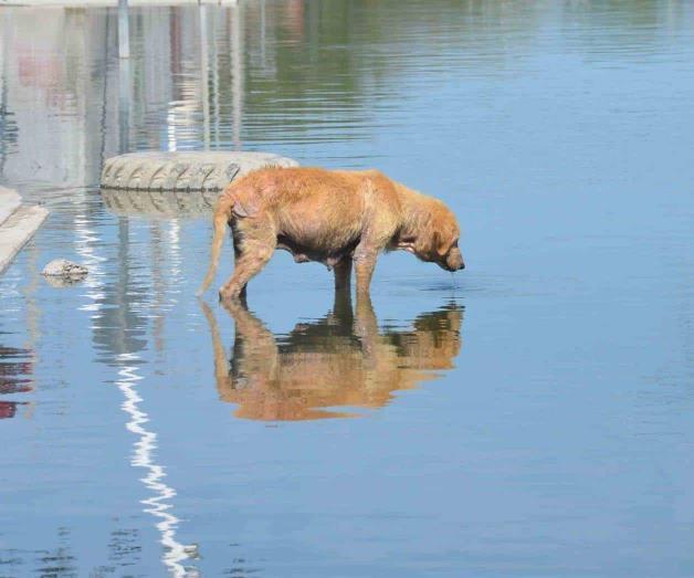 Escala maltrato animal