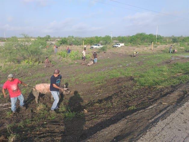 Vuelca camión cargado con cerdos