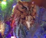 Una familia descubre un búho en su árbol de Navidad