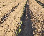 Enverdecen el campo cultivos