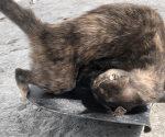 Envenenan mascotas