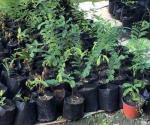 Invitan a reynosenses a adoptar una planta o árbol