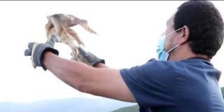 Liberan lechuzas en Camino Real a Tula